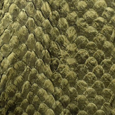 Arapaima (Pirarucu) LL GREEN TURTLE MATTE