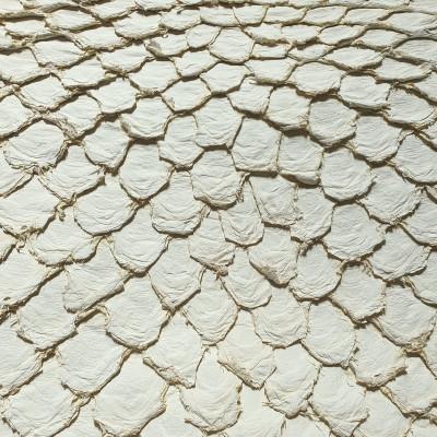 Arapaima (Pirarucu) LR WHITE MATTE