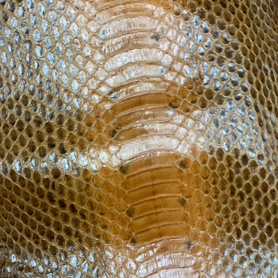 Skin Snake Buccata b/c Cognac shini