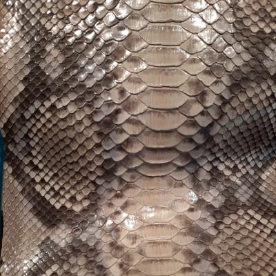 Python Magno
